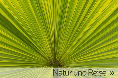 Palmenblatt als Galerieteaser für Reise und Natur-Fotografie