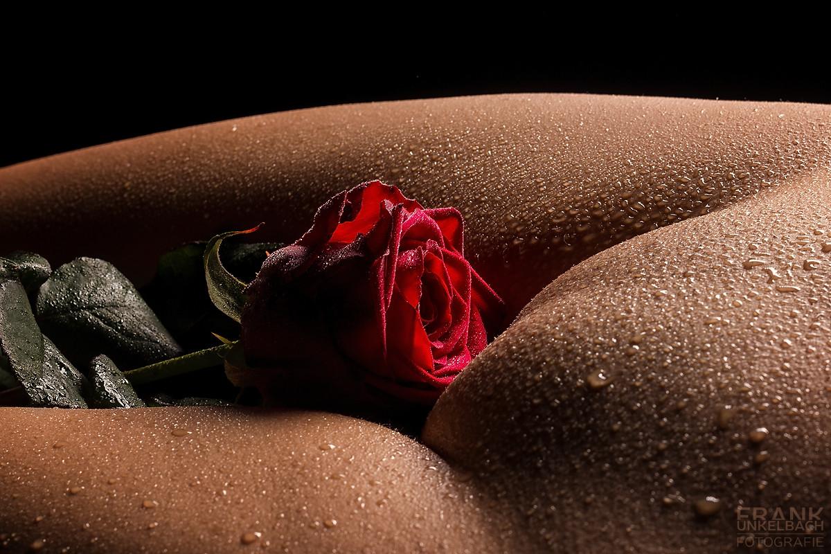 Frau mit einer roten Rose im mit Wassertropfen bedeckten Schritt (Akt)
